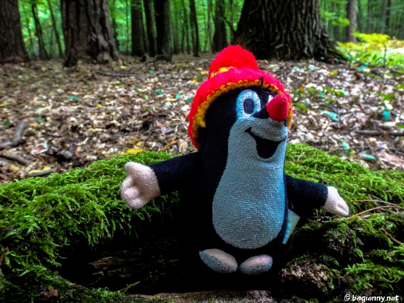 Krecik w lesie