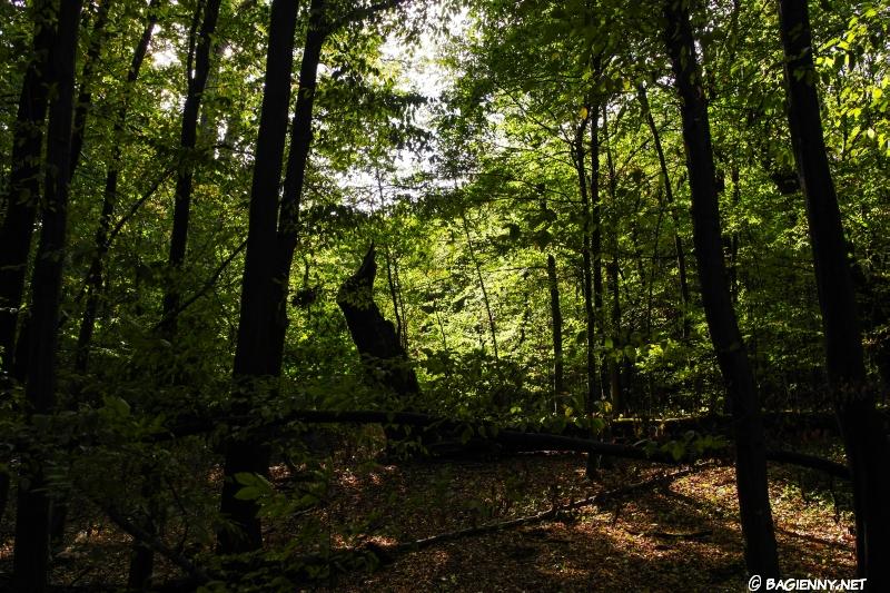 Las Bielański